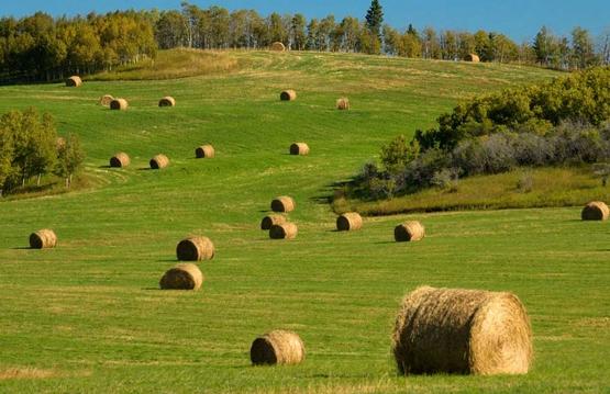 说说加拿大的中国农场主 可谓劣迹斑斑