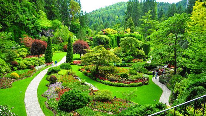 加拿大空气质量和食品安全世界第一 可谓顶级奢华。维多利亚,花园城市。