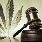 加拿大农场主改种大麻 15倍暴利 蔬果价将大涨