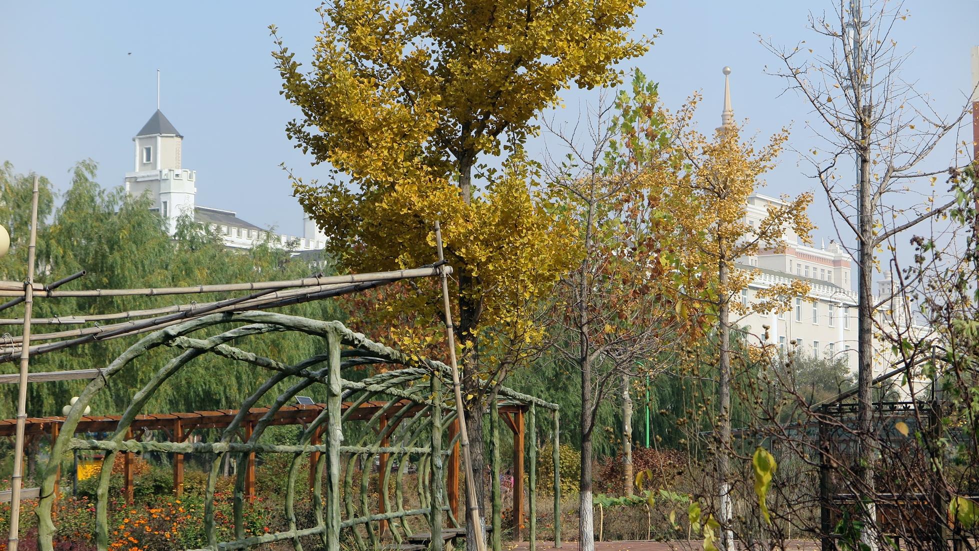 园林和背景中的北京邮电学院/人文大学